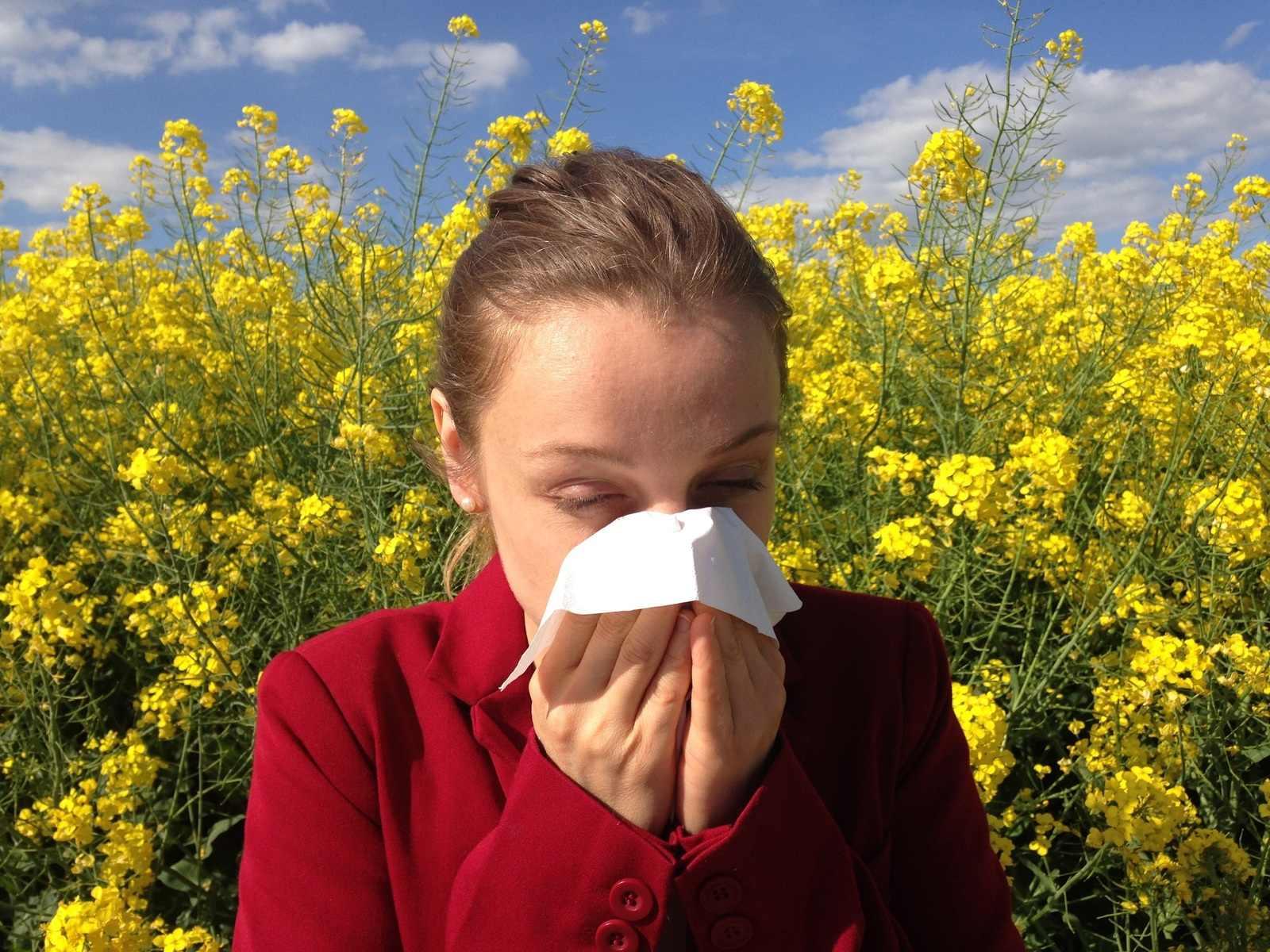 В Новороссийске аллергики со страхом ждут начала цветения амброзии