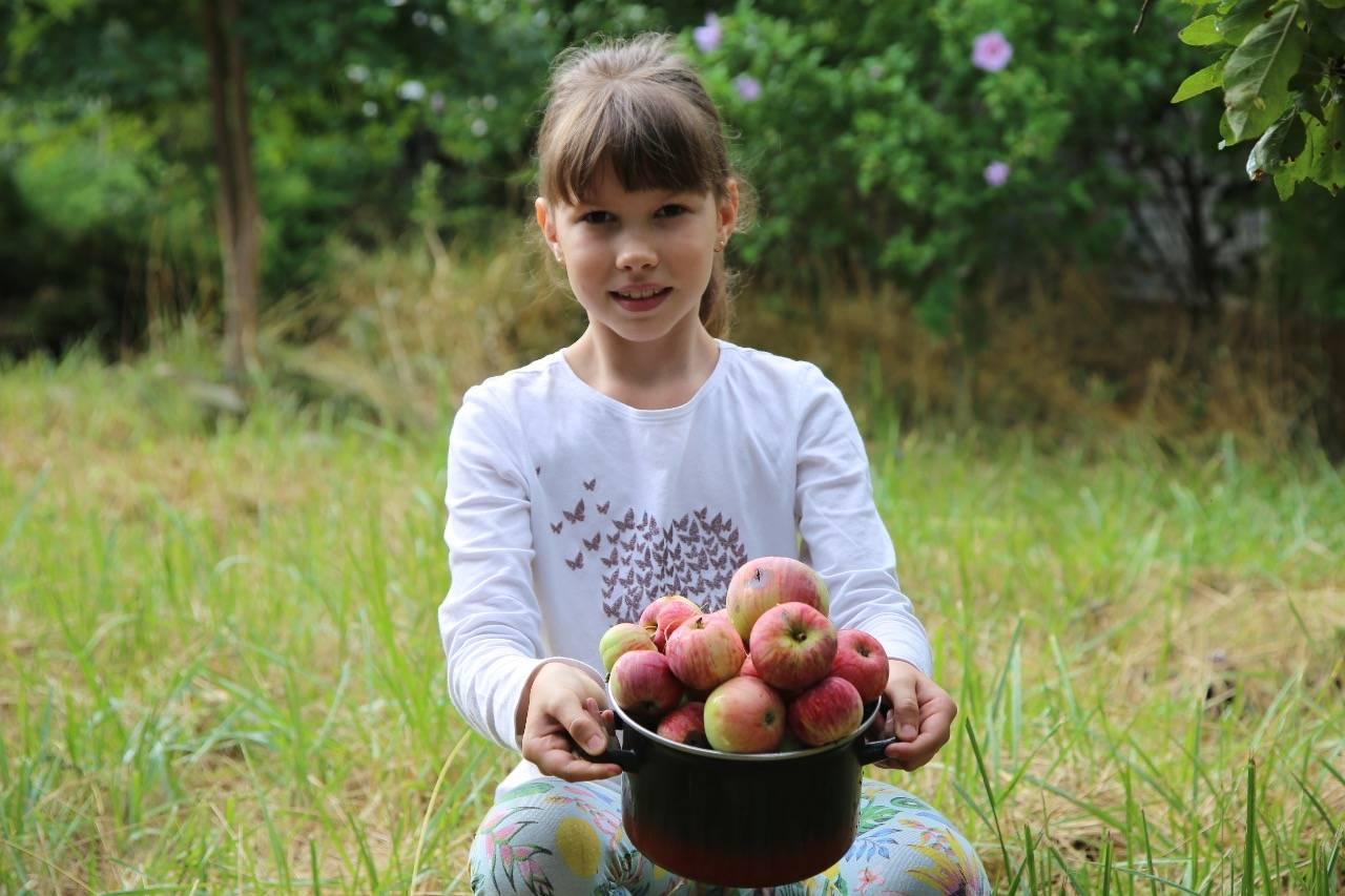 Небывалый урожай яблок в Новороссийске не снизил на них цену