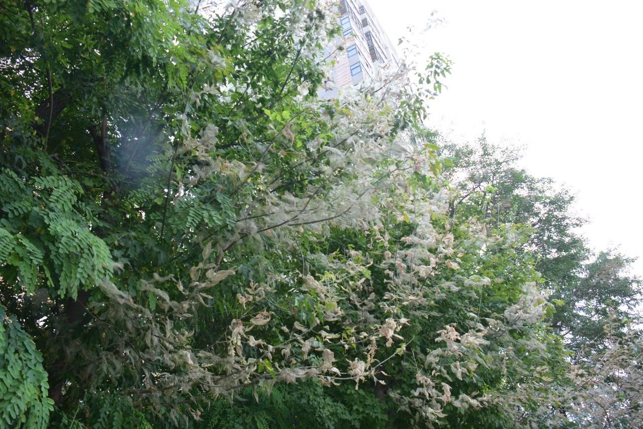 Сады и палисадники Новороссийска атаковали гусеницы