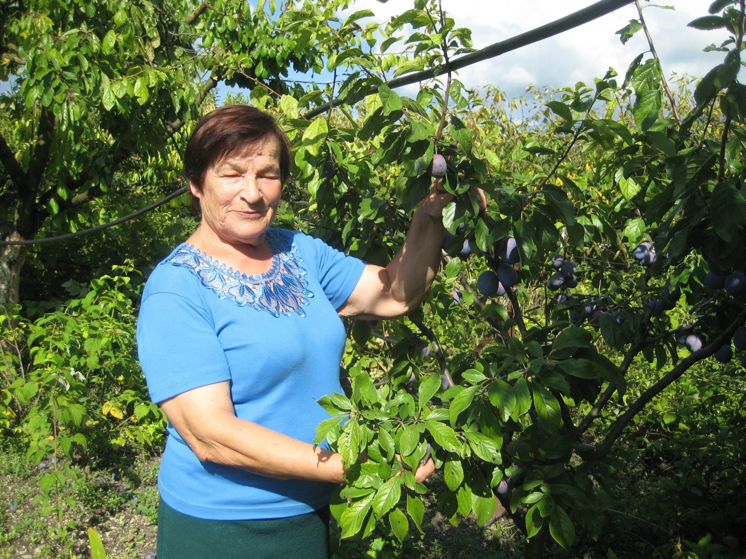 Станичница из Новороссийска делится секретами советских агрономов