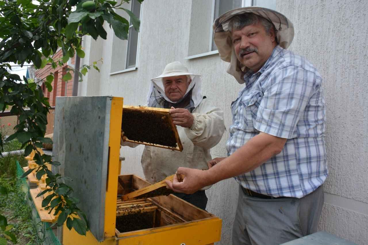 В Новороссийске цена на подсолнечниковый мед не вырастет