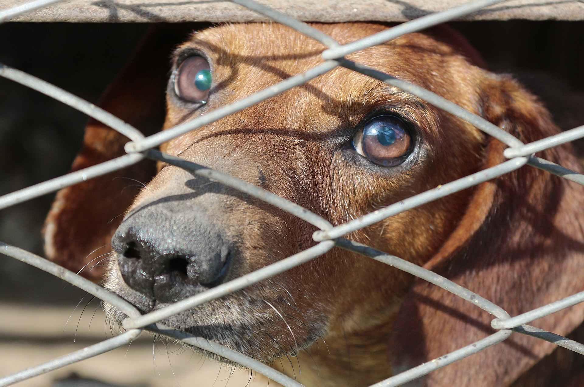 В Госдуму внесли закон о запрете продажи животных в зоомагазинах и на птичьих рынках