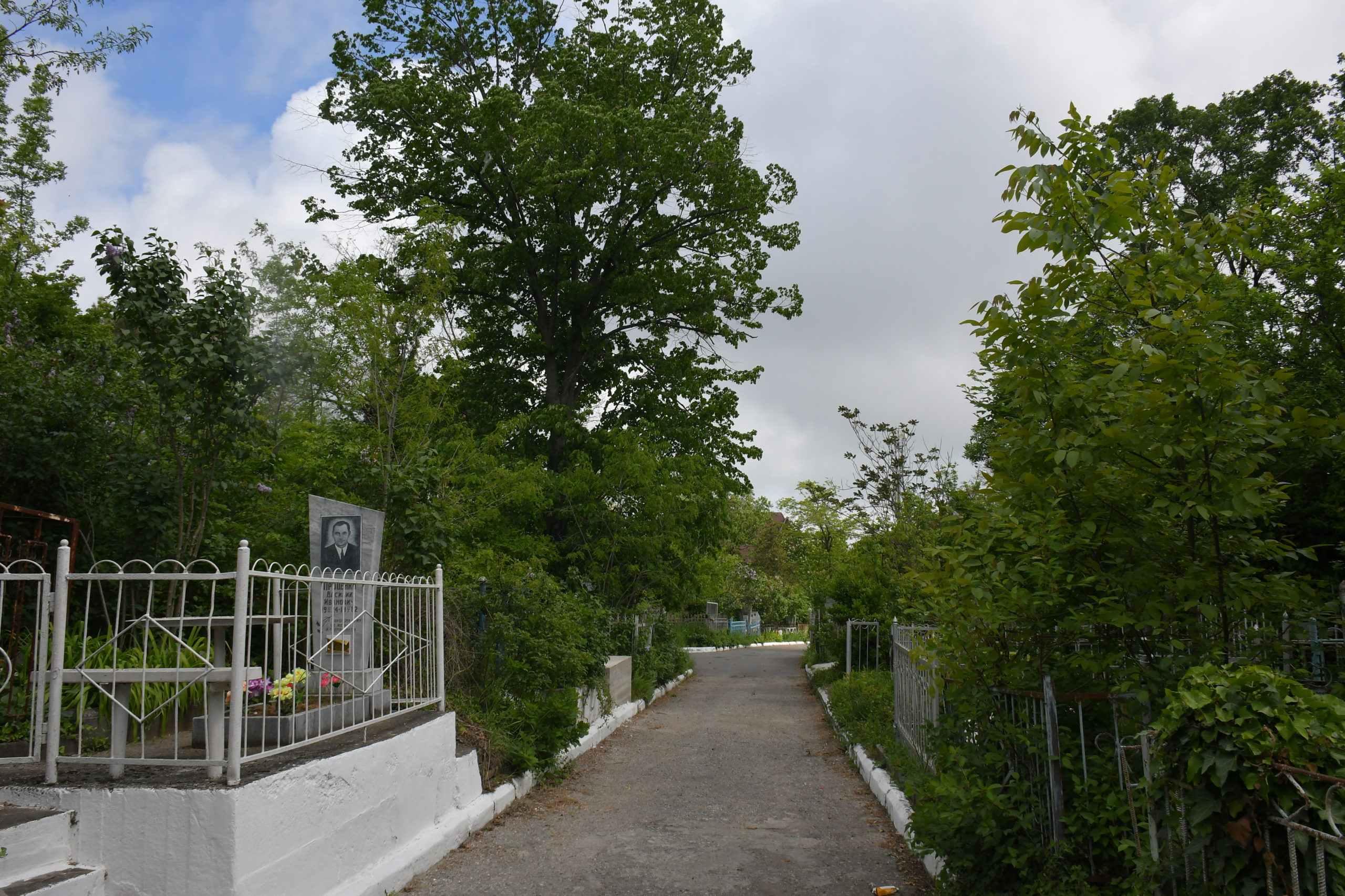 В Новороссийске кладбище «Солнечное» может стать парком
