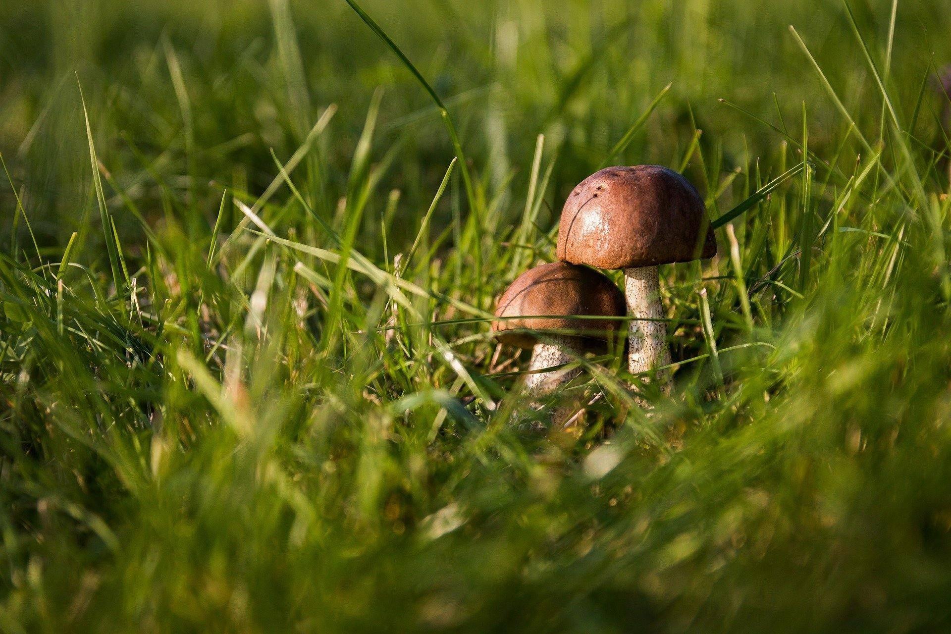 После аномальных ливней под Новороссийском обильно пошли грибы