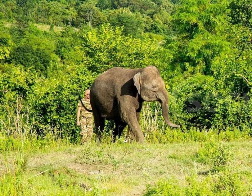 В Сочи отдыхают не только люди, но и слоны (видео)