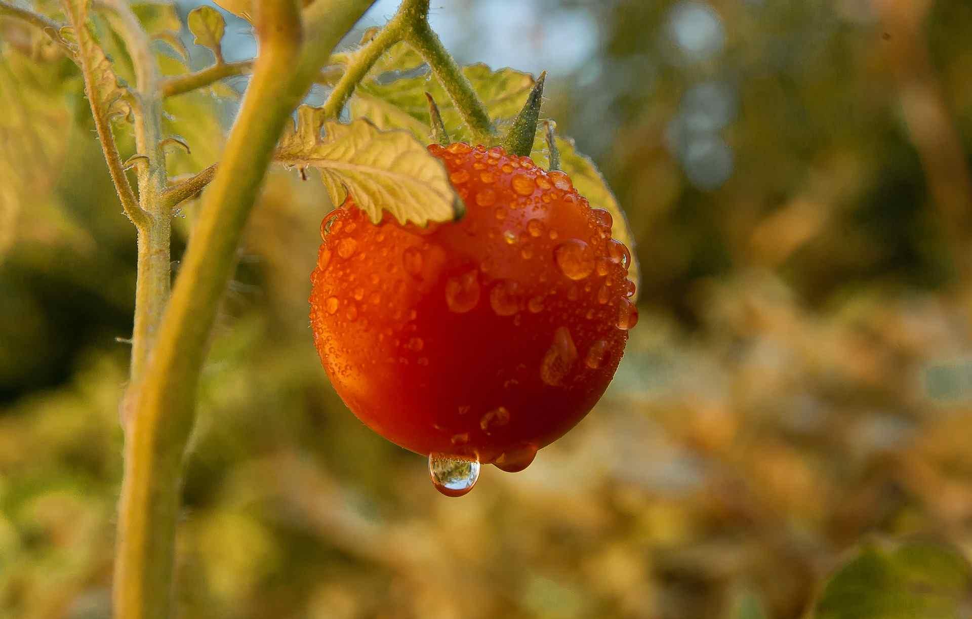 Как спасти огороды и урожаи новороссийцев после продолжительных ливней