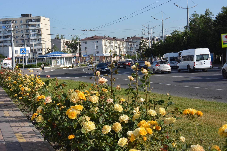В Новороссийске будет много новых цветников и деревьев