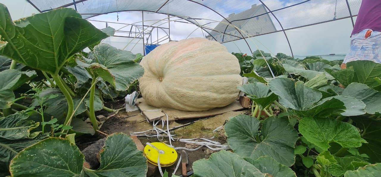 Фермер из Краснодарского края стал победителем  «Агробатла-2021», вырастив гигантскую тыкву