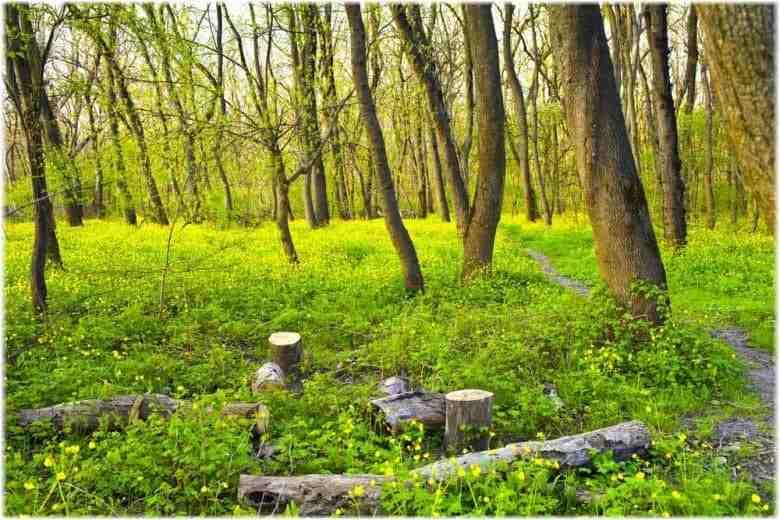 По факту уничтожения деревьев в Цемесской роще возбудили уголовное дело